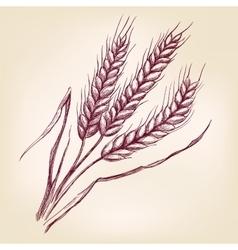 Ears of wheat hand drawn llustration vector