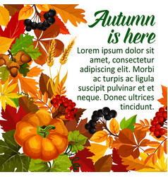 Autumn pumpkin and fall season leaf poster design vector