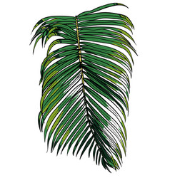 A tropical palm leaf vector