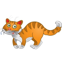 Orange fun cat vector