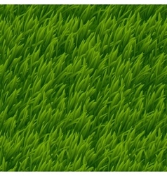 Green grass seamless texture vector image vector image