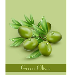 background with green olives vector image