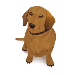 Dachshund realistic of a dog vector