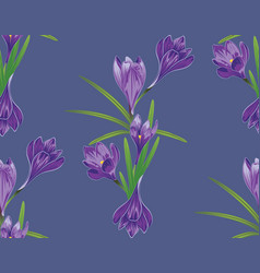 Purple crocus flowers vector