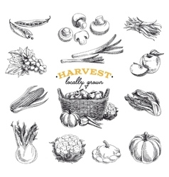 Hand drawn sketch harvest set vector