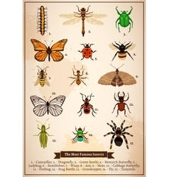 Insects vintage book page vector