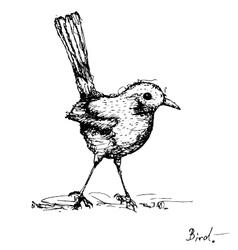 Sketch drawing of bird vector