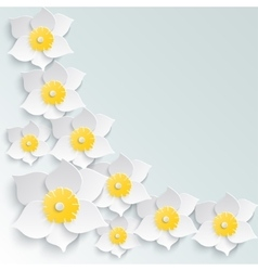 Spring background with white daffodils volume in vector image vector image