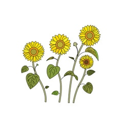 Sunflowers-380x400 vector