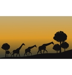 Silhouette of giraffe and yellow sky vector