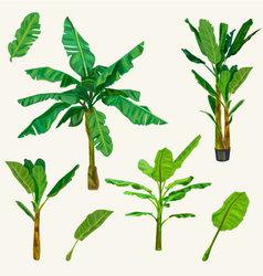 Banana tree vector image vector image