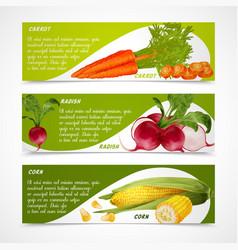 Corn radish carrot banners vector