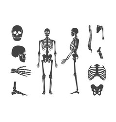 Silhouette black human skeleton and part set vector