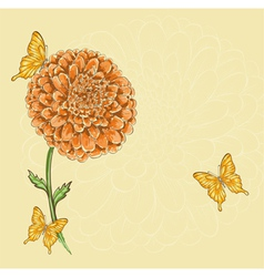 chrysanthemum flower with flying butterflies vector image