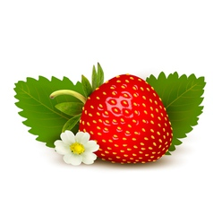 Ripe sweet strawberry and flower with leaves vector