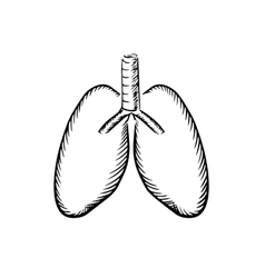 Sketch of human lungs with trachea vector