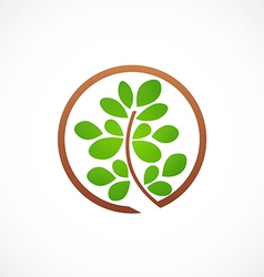 plant leaf ecology abstract logo vector image vector image