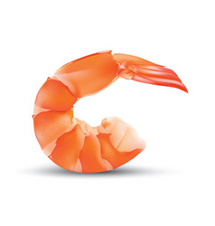 shrimp seafood prawn isolated vector image vector image