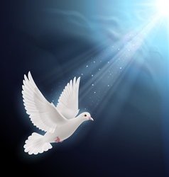 White dove in sunlight vector image