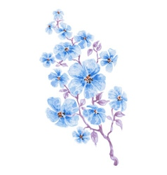 Blue flowers branch watercolor vector