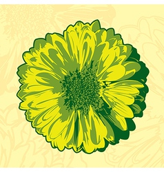 Yellow gerbera vector