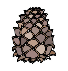 pinecone pine lump isolated on a white background vector image vector image