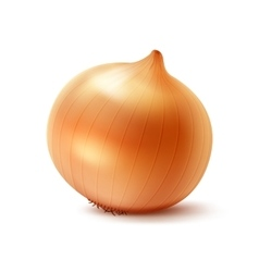Whole Yellow Onion Bulb on White Background vector image