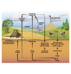 Nitrogen cycle vector