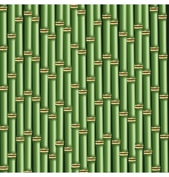 Bamboo trunks background vector