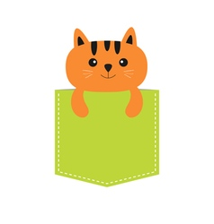Cat in the pocket Cute cartoon character Orange vector image