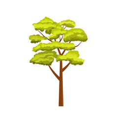oak green tree isolated icon vector image
