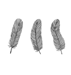 Set of black and white feather vector