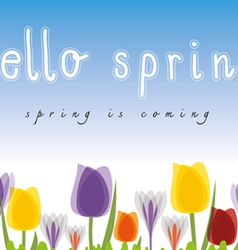 Hello spring tulip blue background vector