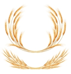 Set of 2 detailed wheat ears eps 10 vector