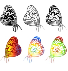 set of beautiful butterflies vector image vector image