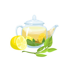 natural green herbal tea in a glass transparent vector image