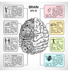 Brain hemispheres sketch infographic vector