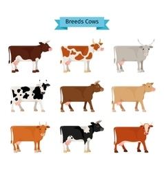 Cow flat icons vector image
