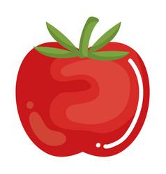tomato fresh vegetable icon vector image vector image