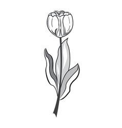 Black and white tulip vector image