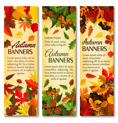 Autumn nature season banner set with fallen leaves vector