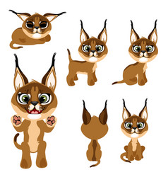 cartoon brown kitten or lynx in different poses vector image