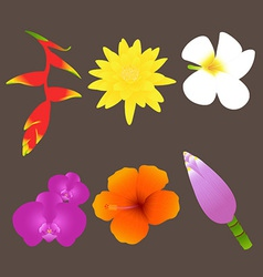 Colorful tropical flowers set vector