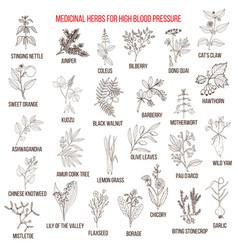 Best medicinal herbs for high blood pressure vector