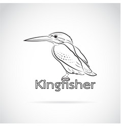 common kingfisher alcedo atthis on white vector image