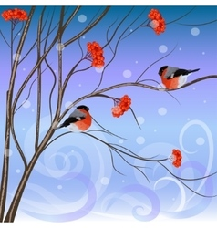 Winter card with bullfinches sitting on rowan vector