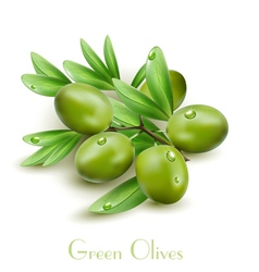 Background with green olives isolated vector