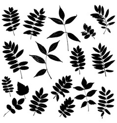 Set of leaves silhouettes vector