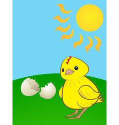 Hatched chicken vector
