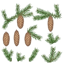Set of fir branches and cones Detailed vintage vector image